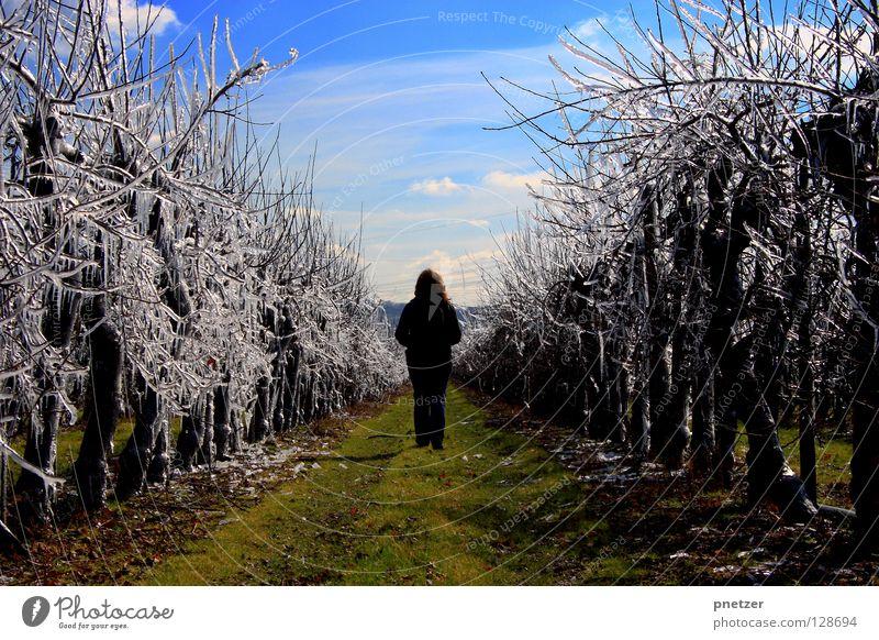 Eisig Himmel blau grün Baum Freude Wiese Schnee Gras Wege & Pfade Feld gehen Landwirtschaft Plantage