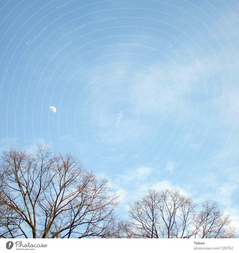 New moon on monday Wolken Baum Geäst Park Himmelskörper & Weltall Mond Mondtag Mond am Tageshimmel blau Ast