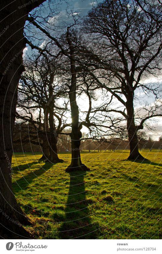 schattenwurf Baum Park Sonnenuntergang Geäst Schatten Wald grün spät Gegenlicht Ast Zweig Baumstamm Abend