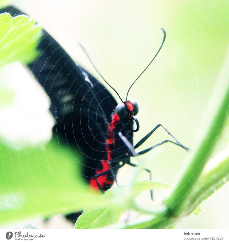 giftig Natur Pflanze grün schön Sommer Baum Erholung rot Blatt Tier schwarz Frühling Wiese Garten außergewöhnlich fliegen