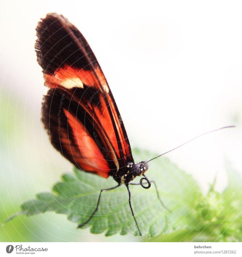 rollig Natur Pflanze Tier Baum Sträucher Blatt Garten Park Wiese Wildtier Schmetterling Tiergesicht Flügel Rüssel Fühler Beine Facettenauge 1 beobachten