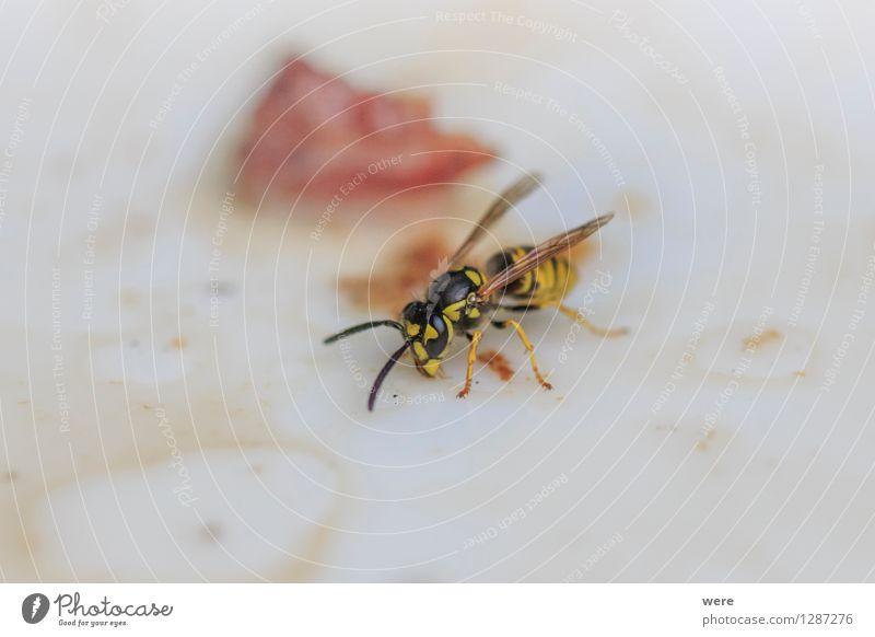 Mundräuber Natur Pflanze Tier Wald Insekt Grillen Biene Umweltschutz Biotop Wespen Tierschutz Plage