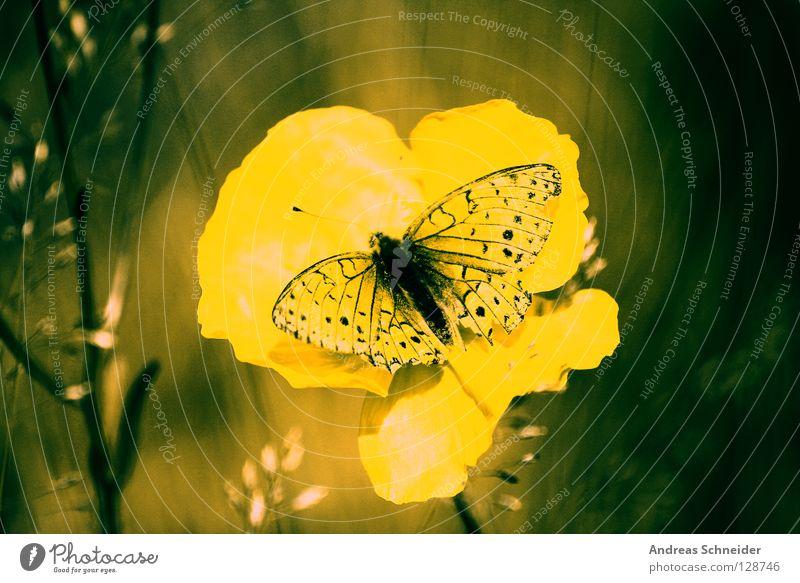 green butterfly Natur gelb Farbe träumen Schmetterling harmonisch Heimat