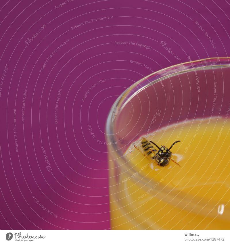 0815 AST | pool position ,-) gelb Schwimmen & Baden rosa Getränk trinken Insekt Biene Saft Überleben Wespen ertrinken Orangensaft Überlebenskampf Saftglas