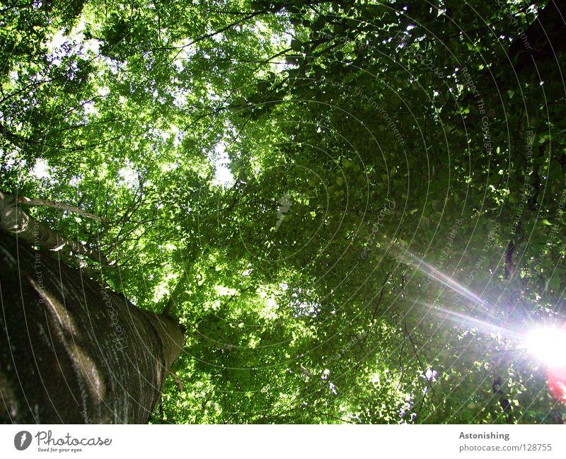 ein Loch im Dach Sonne Baum Blatt Wald grün Perspektive Baumkrone Baumstamm Geäst Blätterdach Baumrinde Ast Licht Sonnenstrahlen Frosch braun blenden