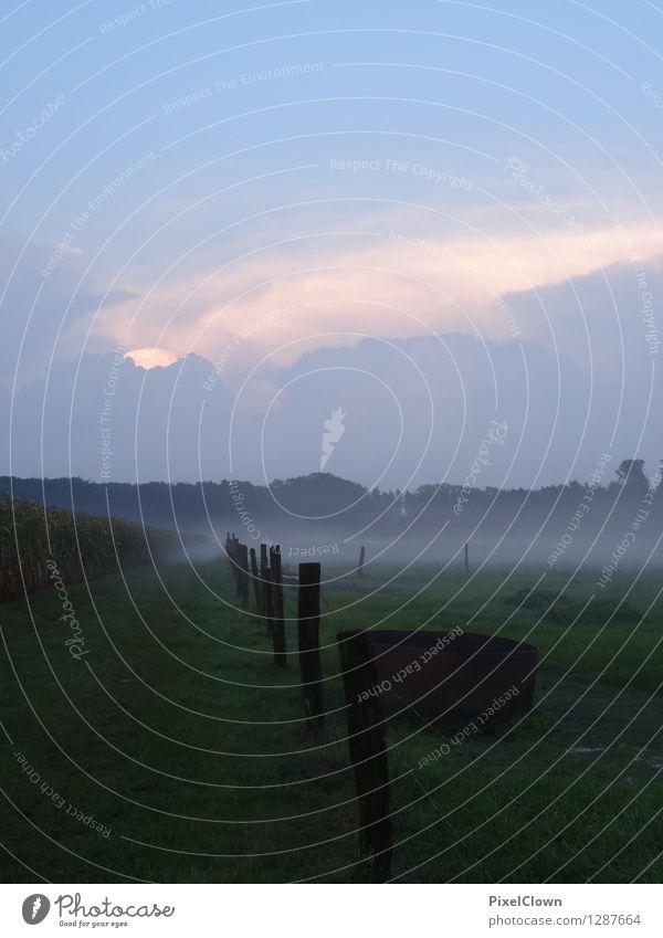 Nebel Natur Ferien & Urlaub & Reisen blau grün Erholung Einsamkeit Landschaft ruhig Tier Wald Gefühle Wiese Stil Lifestyle Tourismus Feld