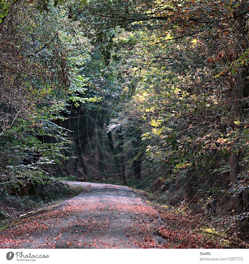 Zwischenzeit Natur Pflanze Sommer Baum Landschaft Blatt ruhig Wald Herbst Wege & Pfade Stimmung Vergänglichkeit Fußweg Wandel & Veränderung Herbstlaub