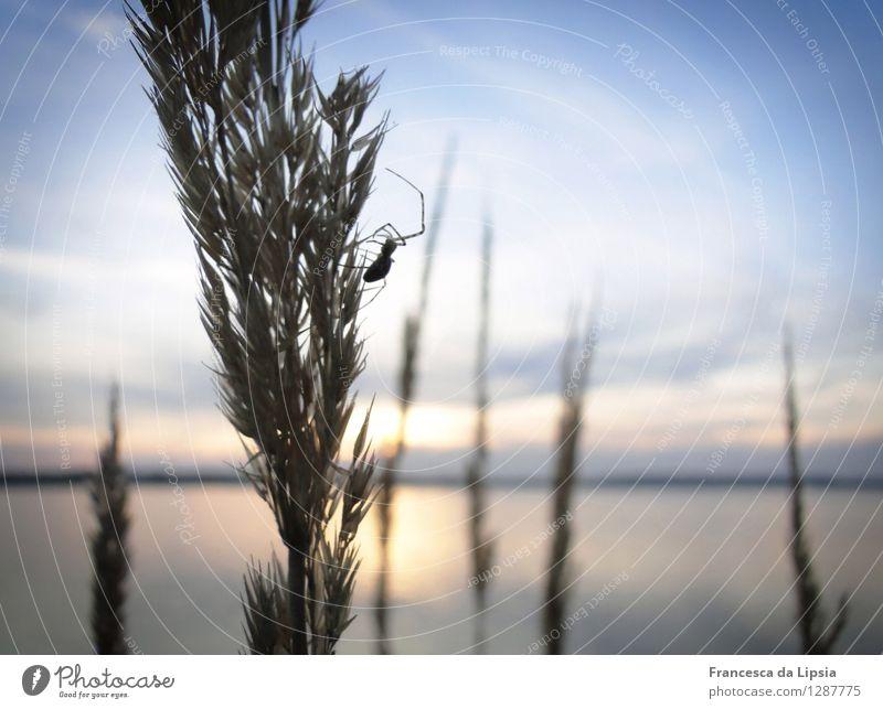 Spinnen am See Himmel Natur Ferien & Urlaub & Reisen blau Sommer Wasser Erholung Einsamkeit ruhig Tier Ferne Strand Gras klein Freiheit See