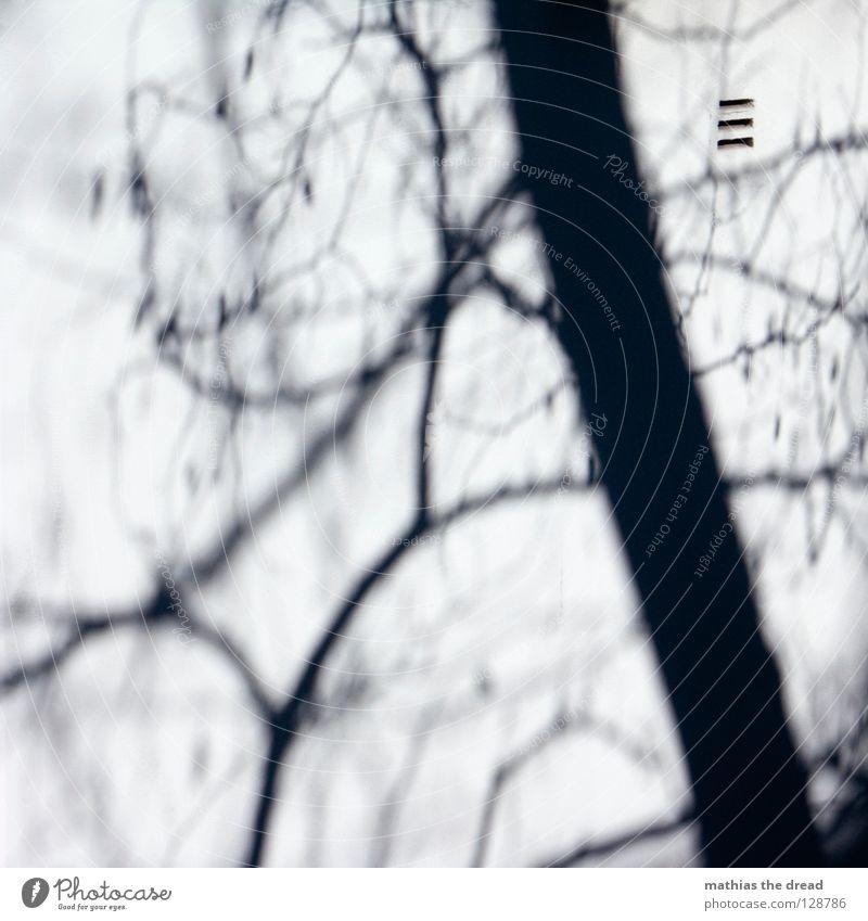 Baum vs. Häuserwand Natur weiß grün Baum Sonne Winter Blatt Haus Tod Leben Graffiti Gebäude Stein Luft Fassade Ast