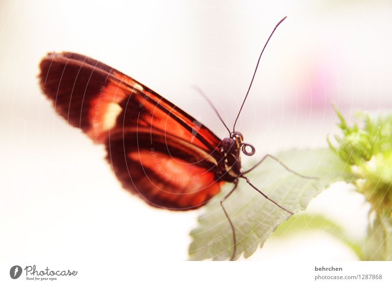 schieflage Natur Pflanze Tier Frühling Sommer Blume Blatt Blüte Garten Park Wiese Wildtier Schmetterling Tiergesicht Flügel 1 beobachten Erholung fliegen