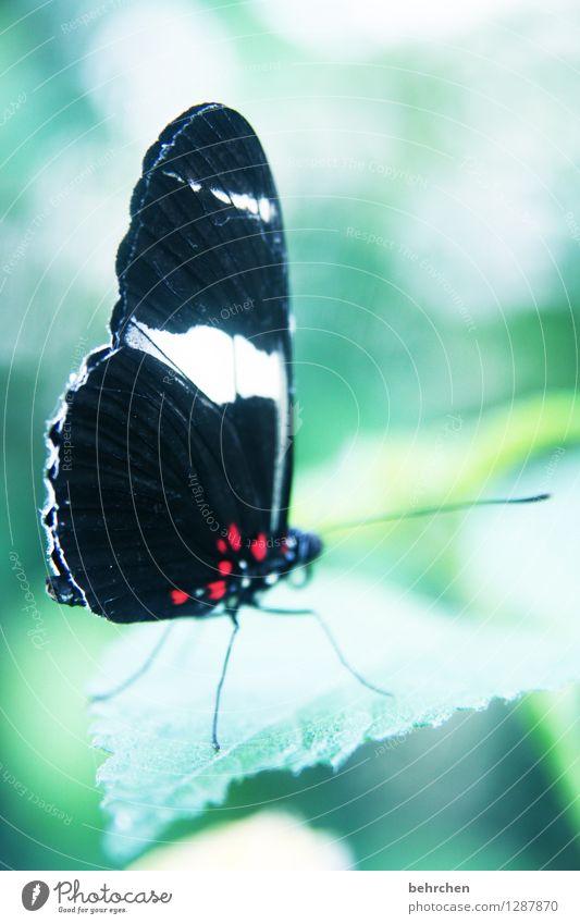 prächtig Natur Pflanze schön Baum Erholung Blatt Tier Wiese Beine Garten außergewöhnlich fliegen Park elegant Wildtier Sträucher