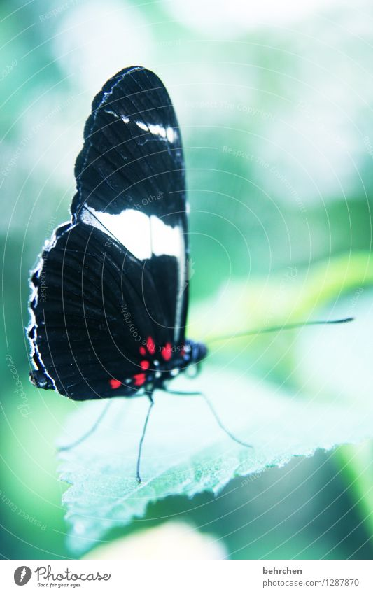 prächtig Natur Pflanze Tier Baum Sträucher Blatt Garten Park Wiese Wildtier Schmetterling Flügel 1 beobachten Erholung fliegen Fressen außergewöhnlich elegant