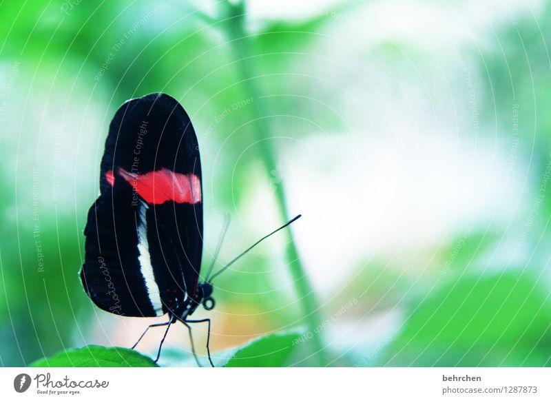 hübscher Natur Pflanze Tier Baum Sträucher Blatt Garten Park Wiese Wildtier Schmetterling Flügel 1 beobachten fliegen Fressen außergewöhnlich elegant exotisch