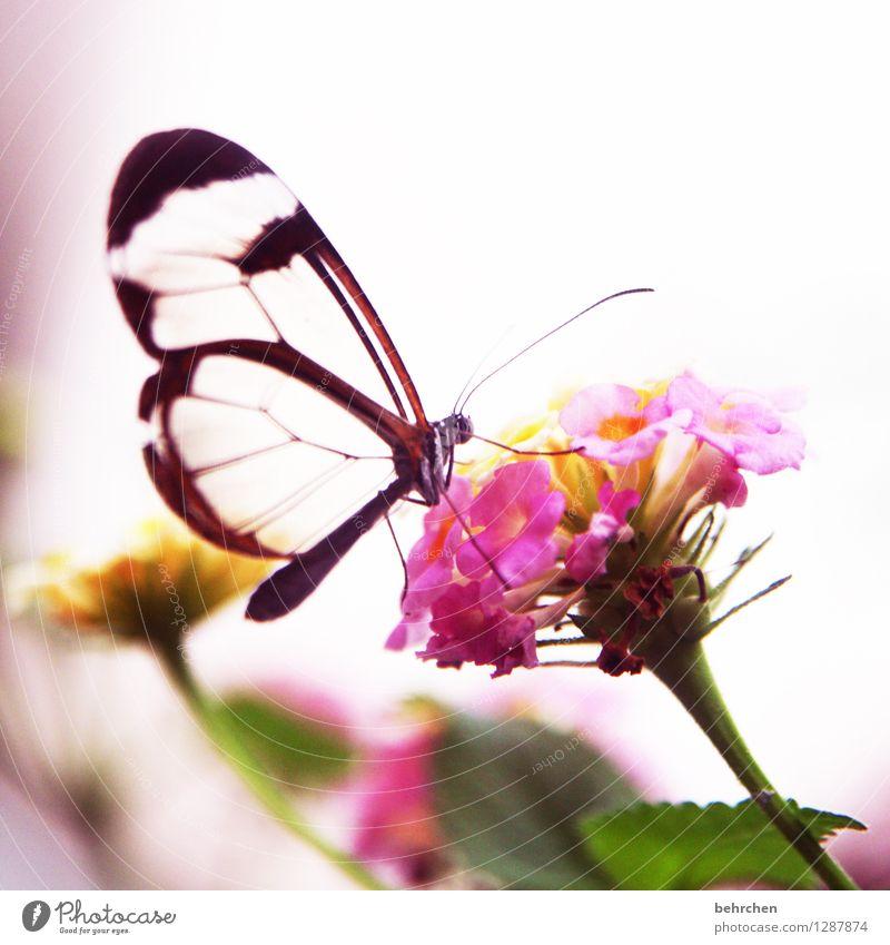 *400*...muss ein schmetterling sein! Natur Pflanze schön Sommer Blume Erholung Blatt Tier Blüte Frühling Wiese klein Garten außergewöhnlich fliegen rosa