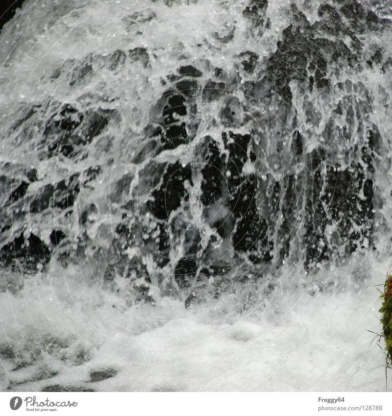 Wildes Wasser spritzen kalt schwarz weiß Bach Wildbach feucht nass Strömung Fluss Schifffahrt Wildtier Berge u. Gebirge Wasserfall Felsen Stein