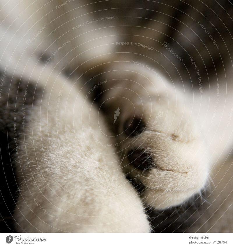 Ausgeschlafen? Katze Fell weich kuschlig Pfote ruhig verschlafen gemütlich Säugetier Wärme Müdigkeit Zufriedenheit Katzenpfote Nahaufnahme Detailaufnahme