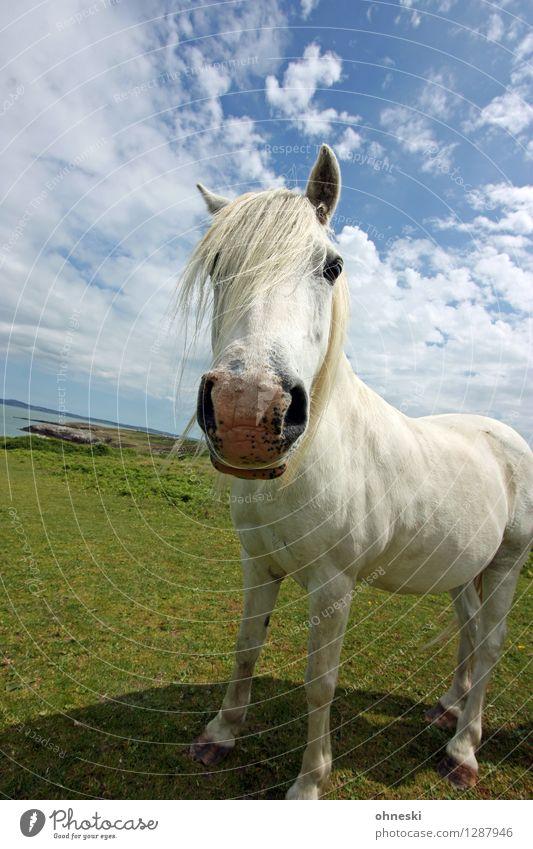 Alles auf Horst Freude Tier lustig Freiheit Beginn Neugier Bildung Pferd Leichtigkeit Pony