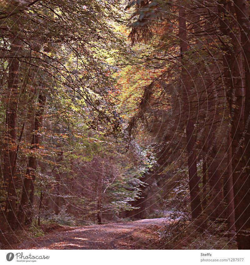 Herbstbeginn Natur Pflanze Baum Landschaft Blatt ruhig Wald Stimmung Romantik Fußweg Herbstlaub herbstlich Herbstfärbung Oktober