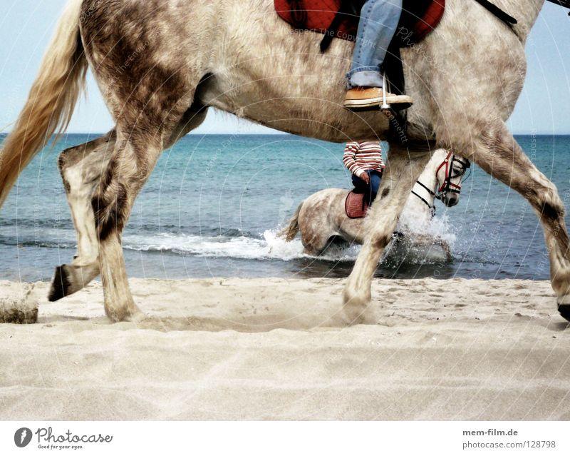 strandreiter Wasser Ferien & Urlaub & Reisen Sommer Meer Strand Tier Sand Verkehr Pferd Spanien Säugetier Mallorca Reitsport Reiter Pferdegangart Meerwasser