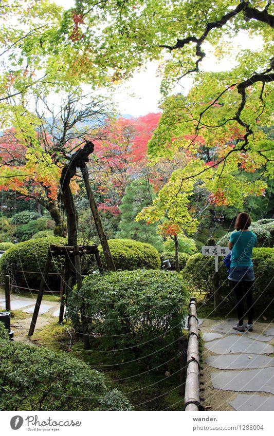 Japanischer Zen-Garten im Herbst, Nikko Mensch Natur Ferien & Urlaub & Reisen Jugendliche Pflanze Farbe Junge Frau Baum Erholung Landschaft ruhig Ferne
