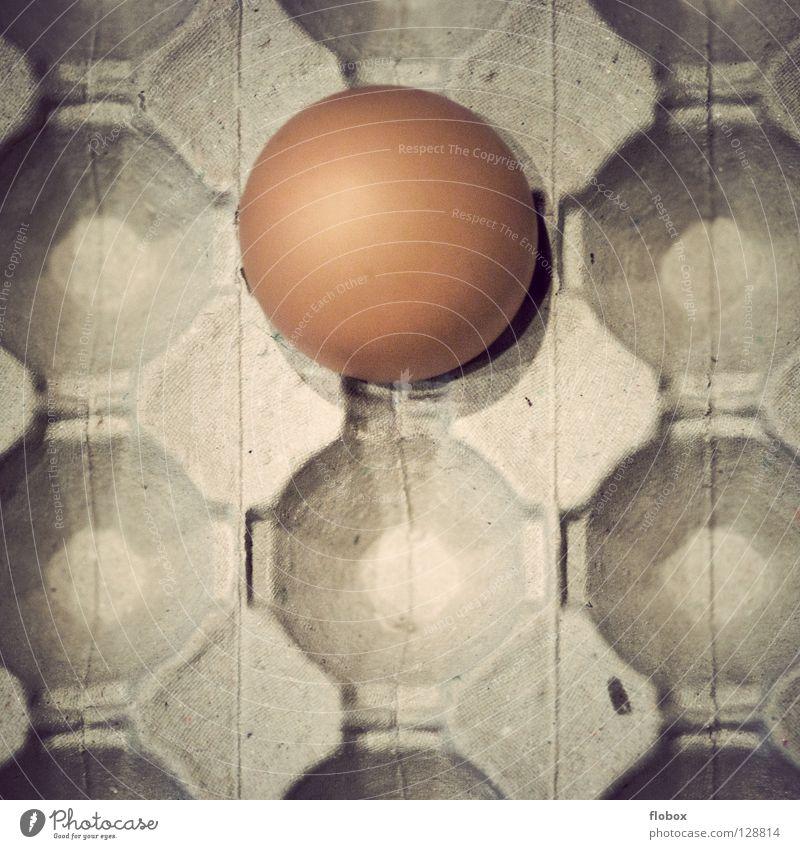 Ostern aus d. Vogelperspektive Osterei springen Gemälde Haushuhn Eierschale Käfig Gehege ökologisch Umwelt Unkrautbekämpfung Eigelb Tier Nutztier Hühnerei