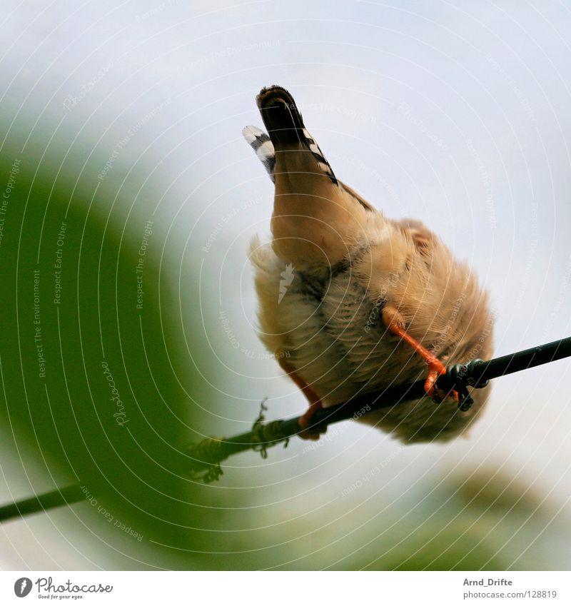 Popo Vogel Stab Feder Rückansicht Blatt Unschärfe Frühling Hinterteil sitzen rückwärts warten