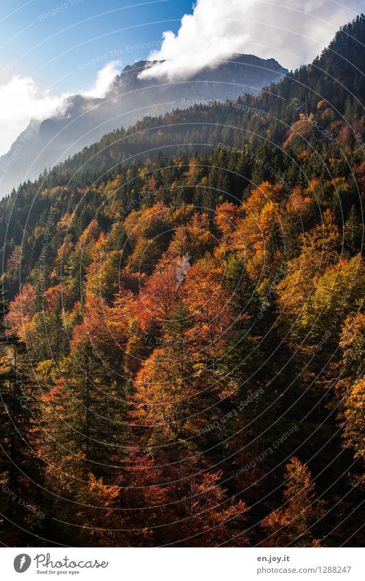 gülden Himmel Natur Ferien & Urlaub & Reisen Pflanze Erholung Landschaft Wolken ruhig Wald Berge u. Gebirge Umwelt gelb Herbst Idylle Ausflug Klima