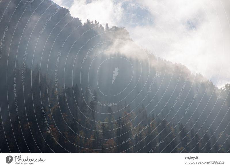 die Kraft der Sonne Ferien & Urlaub & Reisen Berge u. Gebirge Natur Landschaft Pflanze Himmel Sonnenlicht Herbst Klima Wetter Nebel Nadelbaum Wald Alpen