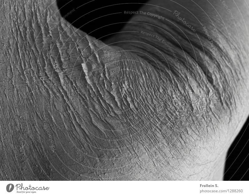 Schulter Mensch Mann Erotik Erwachsene maskulin dreckig Körper ästhetisch 45-60 Jahre Rücken Arme Haut nah Spuren Hautfalten Riss