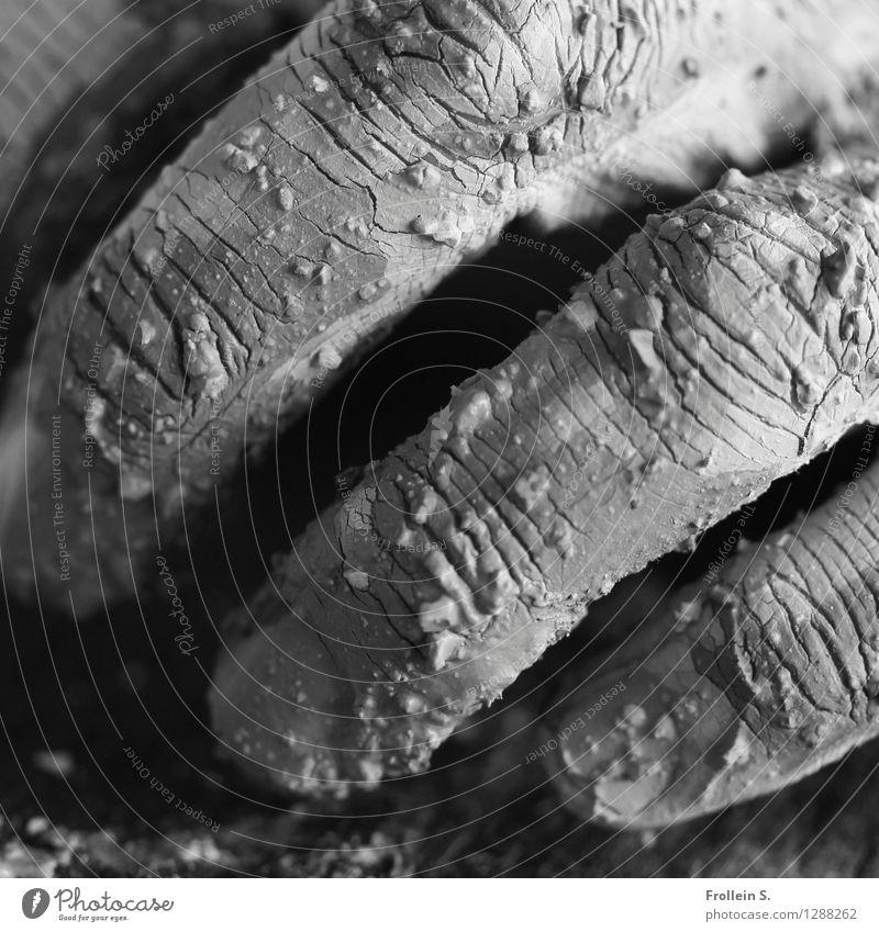 Greifen 2 Mensch Mann Hand Erwachsene maskulin dreckig Haut Finger trocken Riss Sinnesorgane greifen Krümel begreifen Lehm Haptik