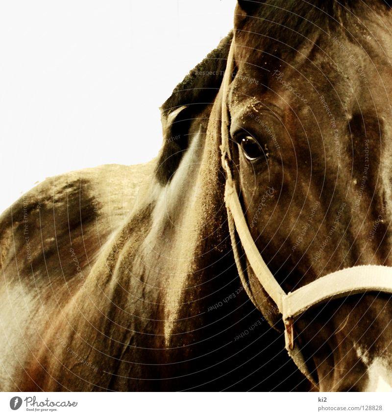 heinrich Natur Bewegung Freiheit Sand Erde Pferd Konzentration gefangen Säugetier Staub Tier