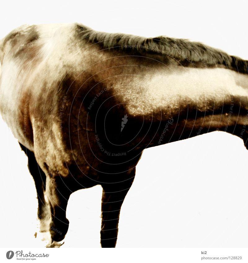 halber heinrich Natur schön Bewegung Freiheit Sand dreckig Erde Pferd Fell Säugetier Selbstständigkeit Abhängigkeit
