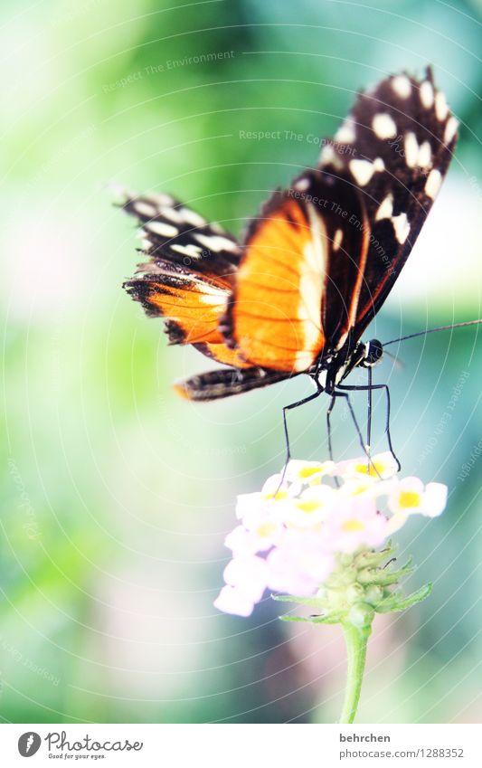 abflug Natur Pflanze Tier Frühling Sommer Schönes Wetter Blume Blatt Blüte Garten Park Wiese Wildtier Schmetterling Flügel Beine Hinterteil 1 Blühend Duft
