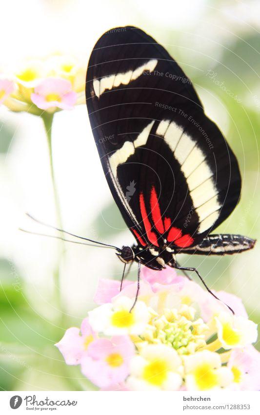 schönheit Natur Pflanze Tier Blume Blatt Blüte Garten Park Wiese Wildtier Schmetterling Tiergesicht Flügel Facettenauge Beine Fühler Rüssel 1 beobachten Blühend