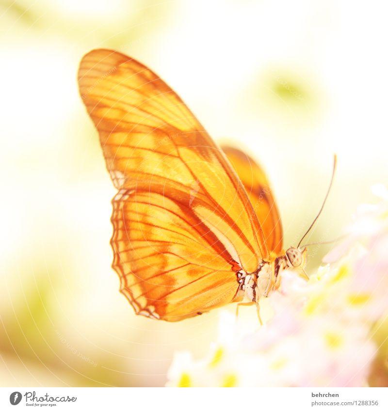 morgenstund hat gold im mund Natur Pflanze schön Sommer Erholung Blume Tier gelb Blüte Frühling Wiese Garten außergewöhnlich fliegen Park Wildtier