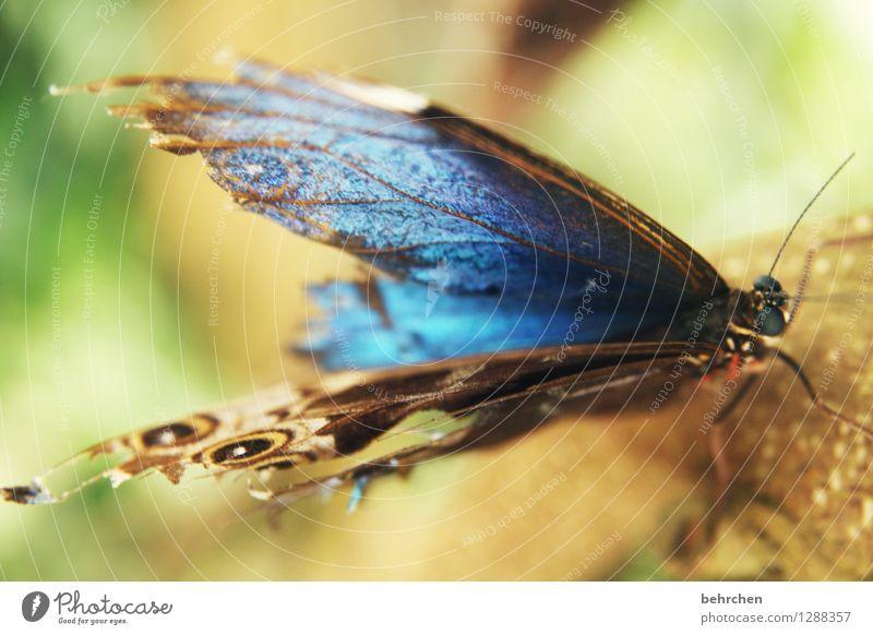 blau Natur schön Erholung Tier Auge Wiese Beine Garten außergewöhnlich fliegen Park elegant Wildtier Flügel beobachten