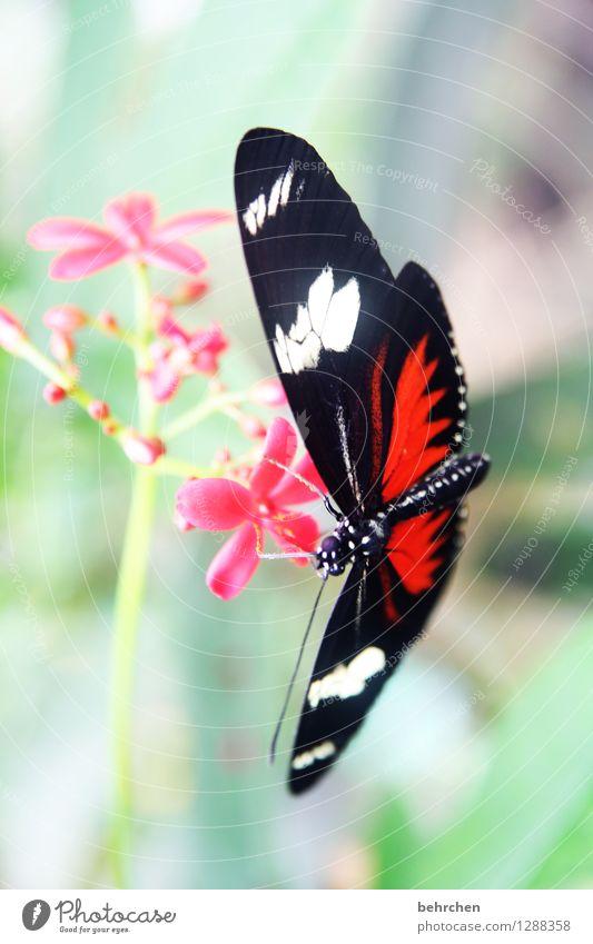 vormittagssnack Natur Pflanze grün schön Sommer Blume rot Blatt Tier schwarz Frühling Blüte Wiese Garten außergewöhnlich fliegen