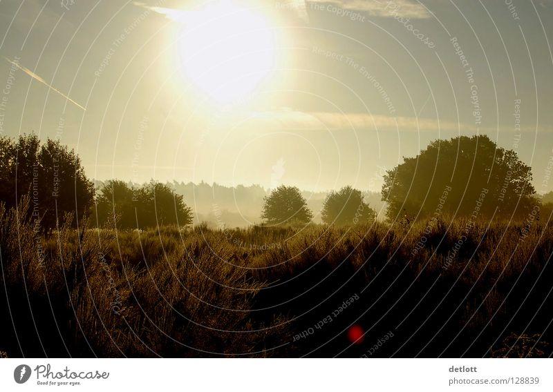 Wahner Heide 5 Natur Himmel Sonne grün Ferien & Urlaub & Reisen Herbst Landschaft braun wandern Nebel Erde Spaziergang Köln