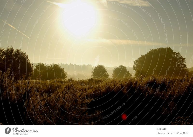 Wahner Heide 5 Sonnenuntergang Abend braun grün wandern Licht Nebel Herbst Köln Landschaft Himmel Erde Spaziergang Natur Ferien & Urlaub & Reisen sunrise