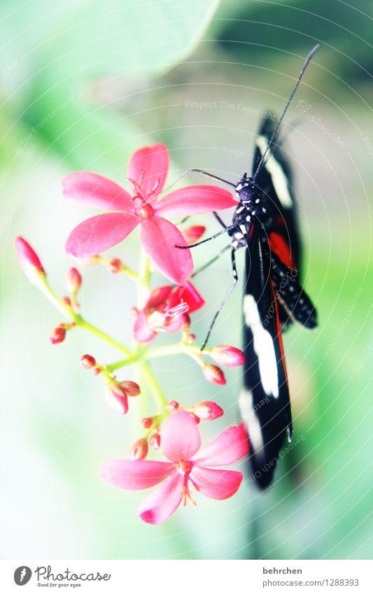 abhängen Natur Pflanze Tier Schönes Wetter Blume Blatt Blüte Garten Park Wiese Wildtier Schmetterling Tiergesicht Flügel Facettenauge Fühler Beine Hinterteil