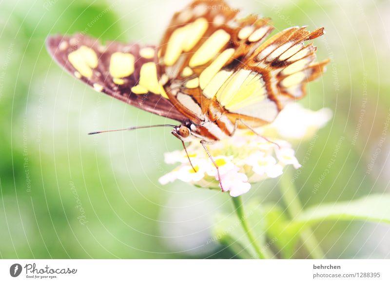 die leichtigkeit des seins Natur Pflanze schön Blume Erholung Blatt Tier Blüte Wiese Garten außergewöhnlich fliegen Park elegant Wildtier Flügel