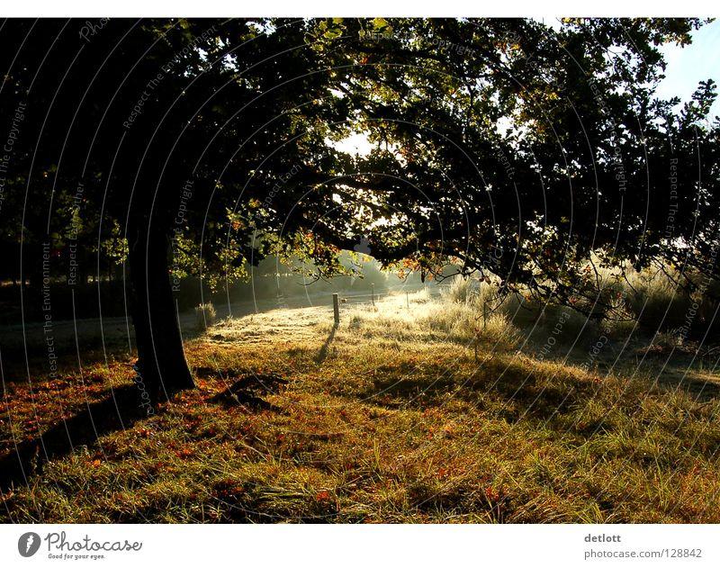 Wahner Heide 8 Sonnenuntergang Abend braun grün Licht Herbst Landschaft Spaziergang Natur Schatten