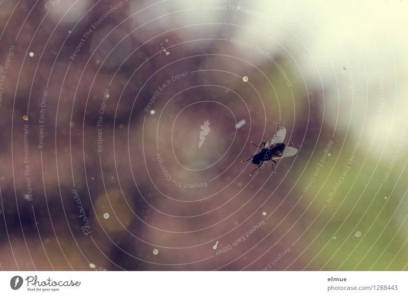 Das Verursacherprinzip. Fenster dreckig trist Fliege sitzen Sauberkeit Gelassenheit Wut Verzweiflung anstrengen Aggression Identität Durchblick Ekel Frustration Ärger