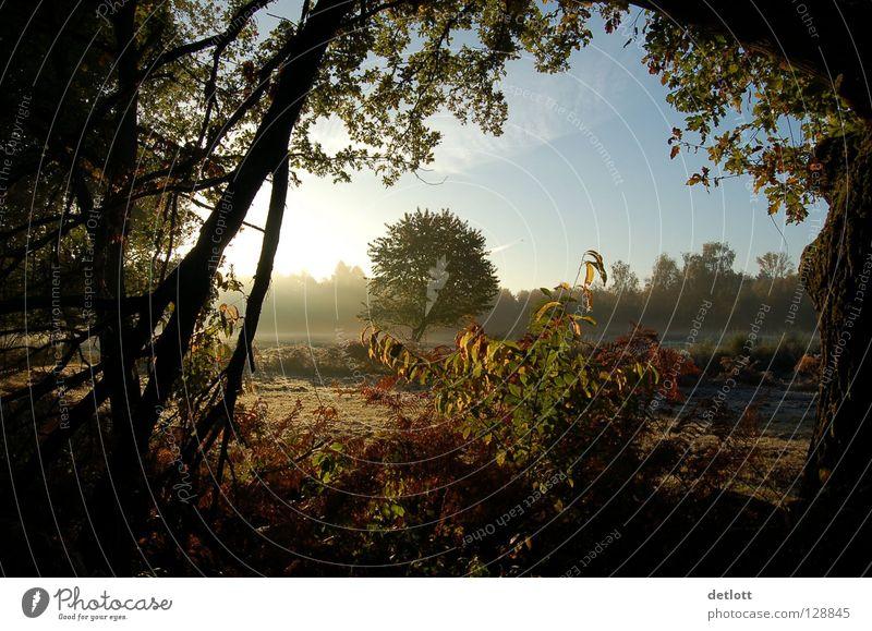 Wahner Heide 11 Sonnenuntergang Abend braun grün Licht Baum Blatt Herbst Landschaft Spaziergang Natur Schatten Himmel