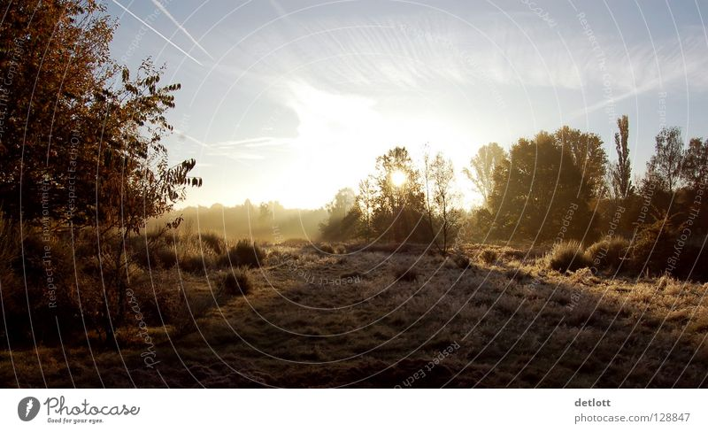 Wahner Heide 18 Sonnenuntergang Abend braun grün Licht Herbst Landschaft Spaziergang Natur Schatten Kontrast