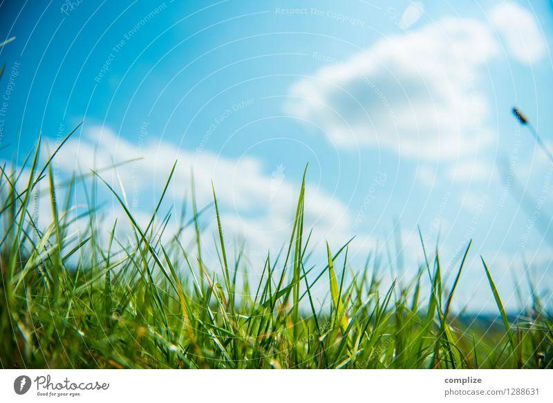 Auf der Wiese Gesundheit Ferien & Urlaub & Reisen Sonne Sport Umwelt Natur Landschaft Pflanze Urelemente Himmel Wolken Klima Wetter Schönes Wetter Gras