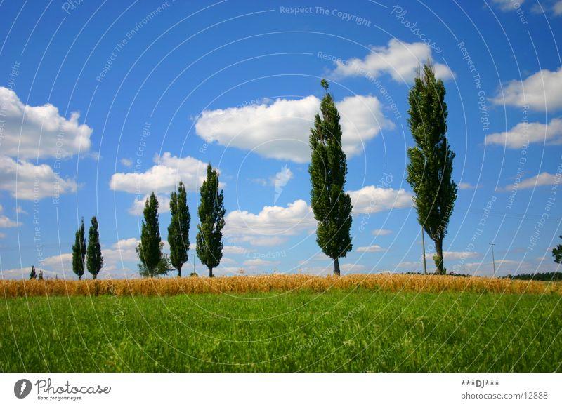 Sommerfeeling Natur Himmel Baum Sonne grün blau Ferien & Urlaub & Reisen ruhig Wolken Gras Feld Rasen Ähren