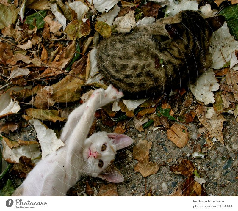 Störenfried Blatt Tier Katze Säugetier Pfote frech Katzenbaby nerven