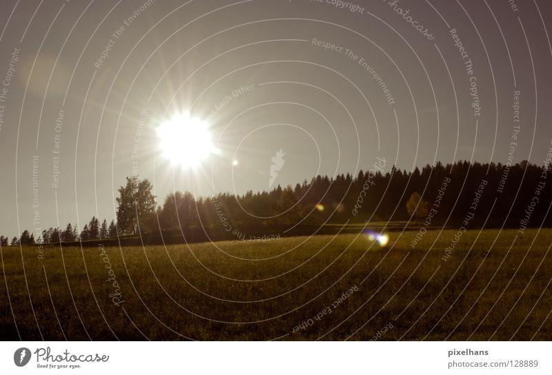 Hundstage... Baum Sonne Sommer ruhig Wiese Berge u. Gebirge Freiheit Wärme Landschaft frisch heiß Hügel leuchten Strahlung blenden