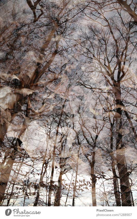 Baumallee Himmel Natur Ferien & Urlaub & Reisen Pflanze schön Einsamkeit Blatt ruhig Tier Wald Stil Lifestyle Kunst braun Stimmung